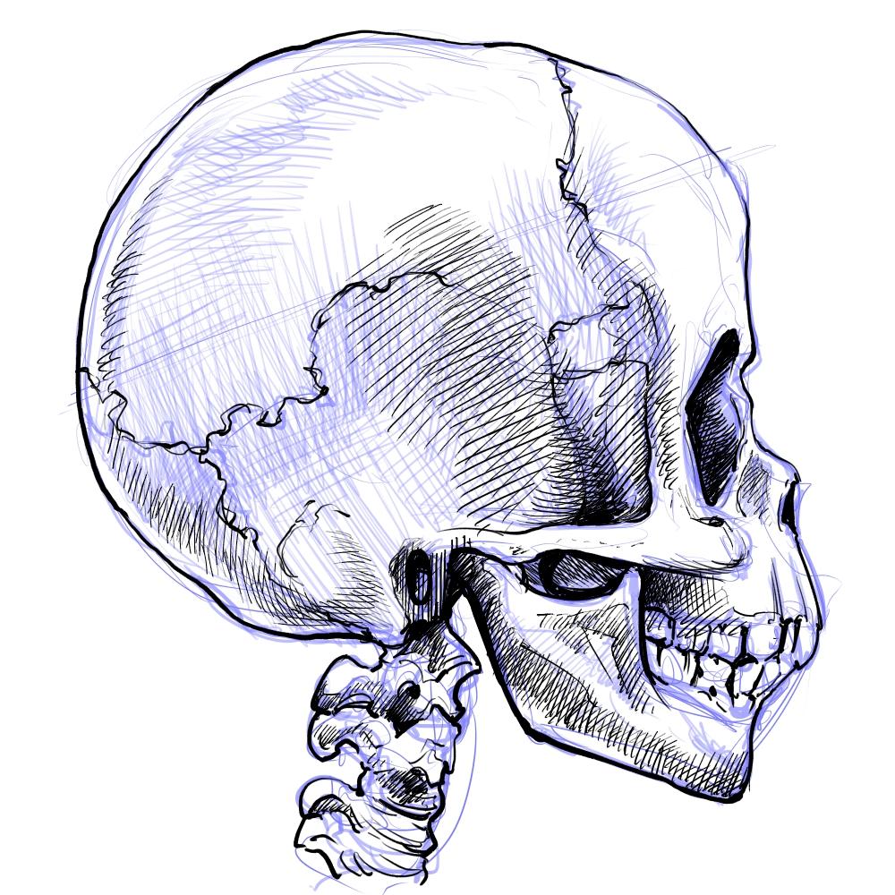 その116 骨・筋肉を描いて覚える